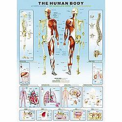 EUROGRAPHICS Puzzle Ľudské telo 1000 dielikov
