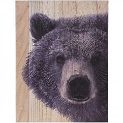 Obraz na dreve Grizzly bear, 28 x 38 cm